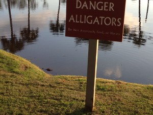 Yes, that is a gator enjoying the water beneath the sign.